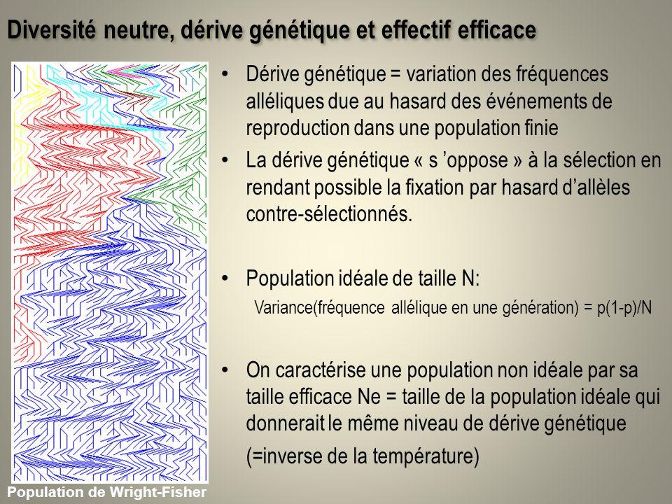 Diversité neutre, dérive génétique et effectif efficace