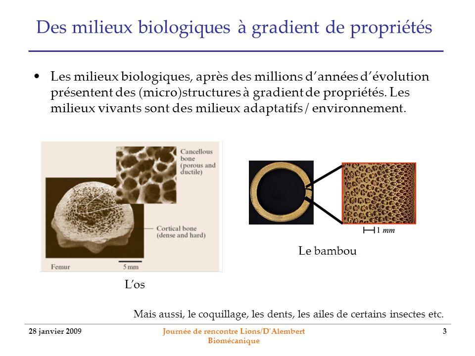 Des milieux biologiques à gradient de propriétés