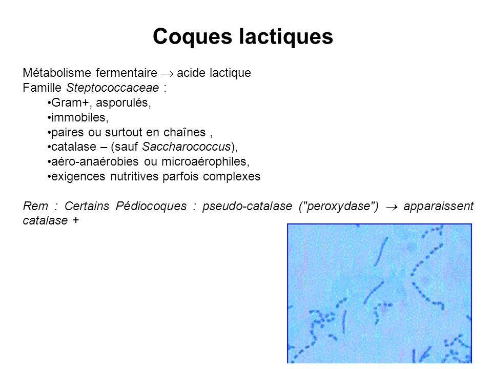 Coques lactiques Métabolisme fermentaire  acide lactique