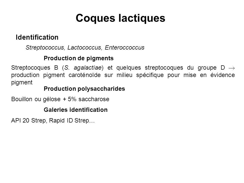 Coques lactiques Identification