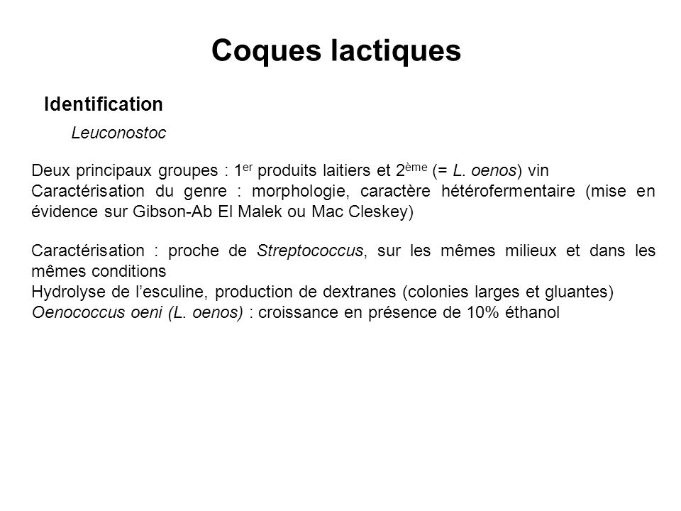 Coques lactiques Identification Leuconostoc