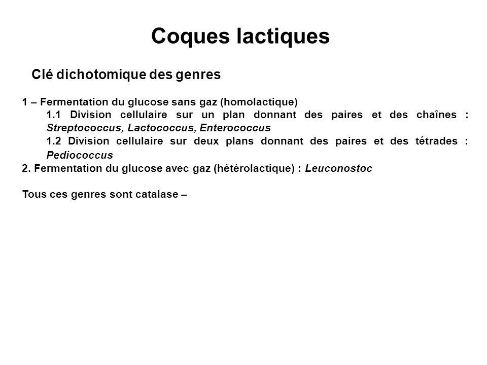 Coques lactiques Clé dichotomique des genres
