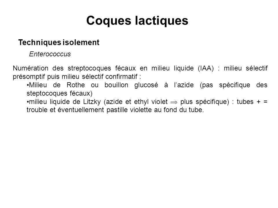 Coques lactiques Techniques isolement Enterococcus