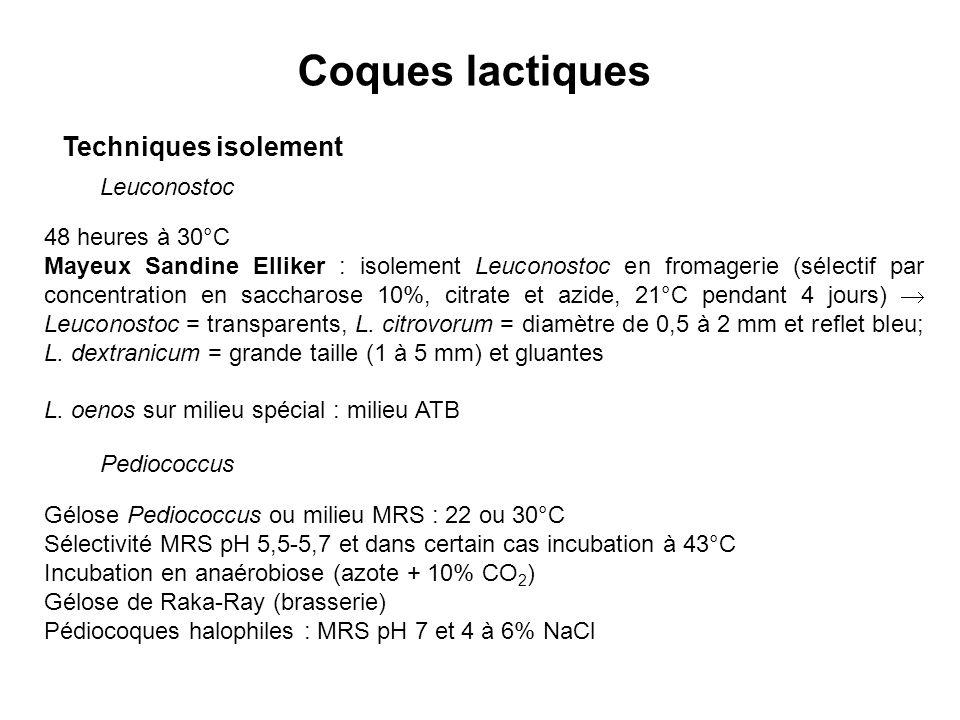 Coques lactiques Techniques isolement Leuconostoc 48 heures à 30°C