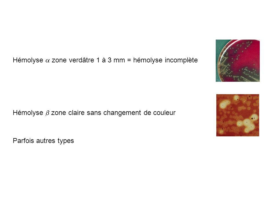 Hémolyse a zone verdâtre 1 à 3 mm = hémolyse incomplète