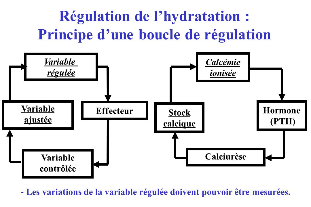 Régulation de l'hydratation : Principe d'une boucle de régulation