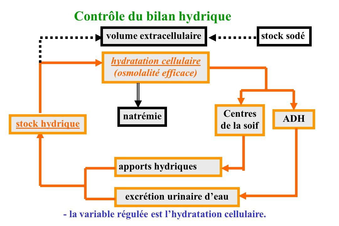 Contrôle du bilan hydrique