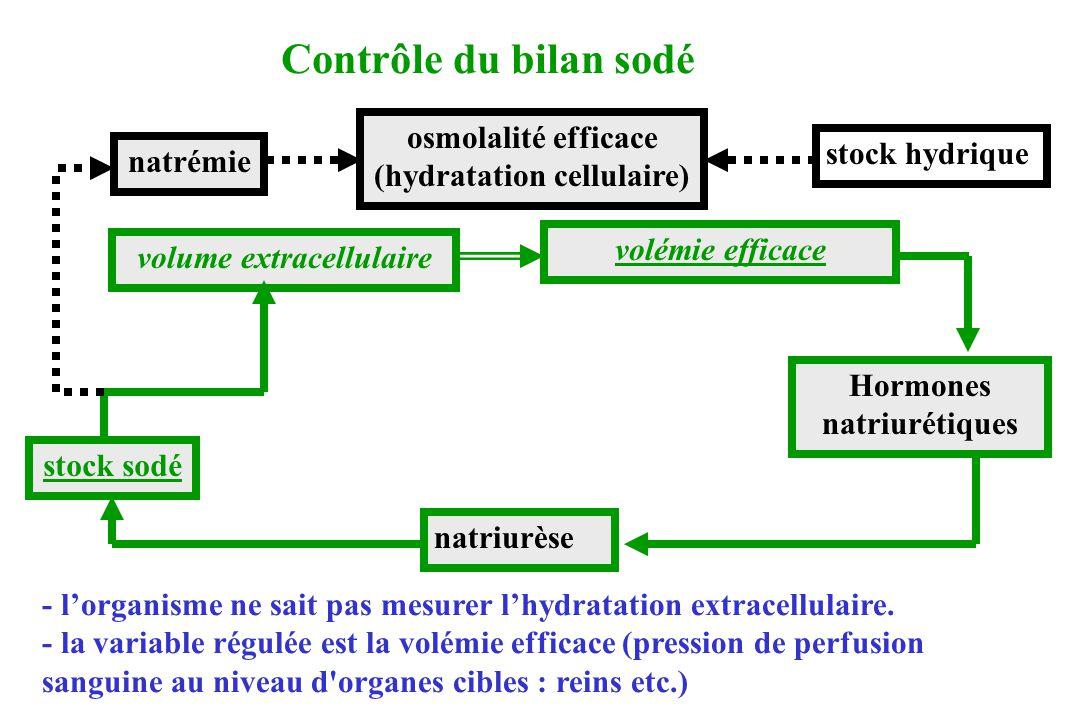 Contrôle du bilan sodé osmolalité efficace (hydratation cellulaire)