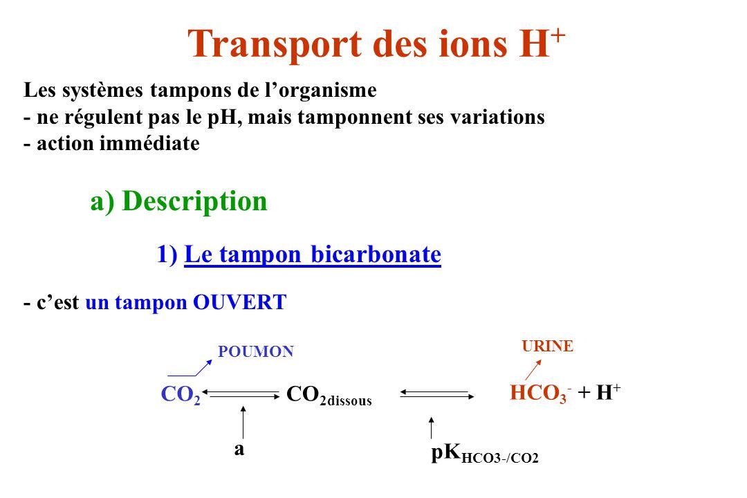 Transport des ions H+ Les systèmes tampons de l'organisme