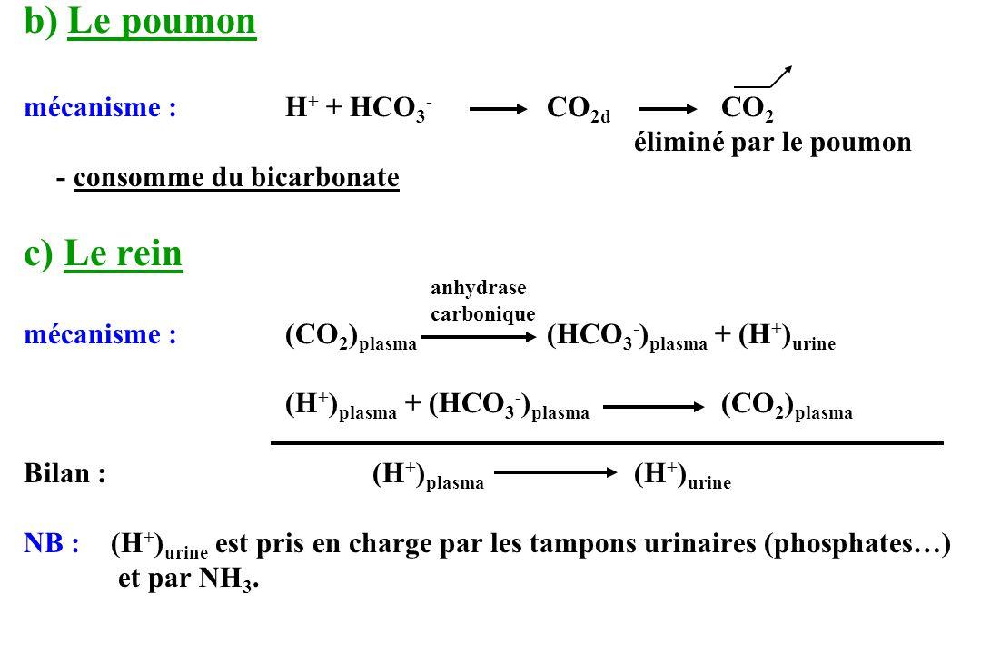 b) Le poumon c) Le rein mécanisme : H+ + HCO3- CO2d CO2