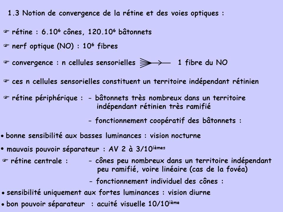 1.3 Notion de convergence de la rétine et des voies optiques :