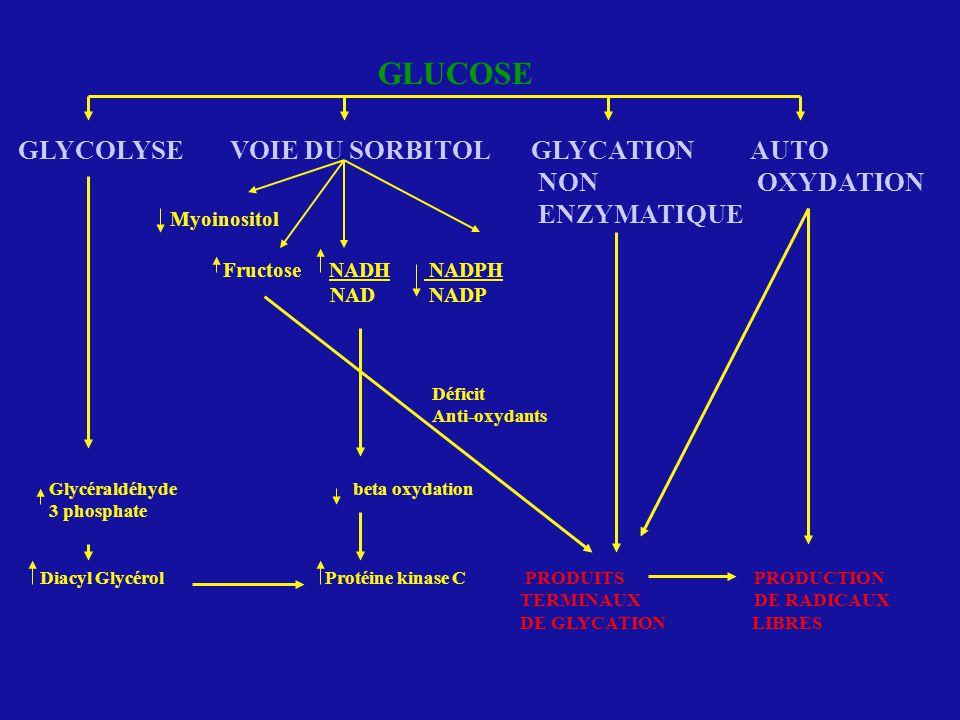 GLUCOSE GLYCOLYSE VOIE DU SORBITOL GLYCATION AUTO NON OXYDATION