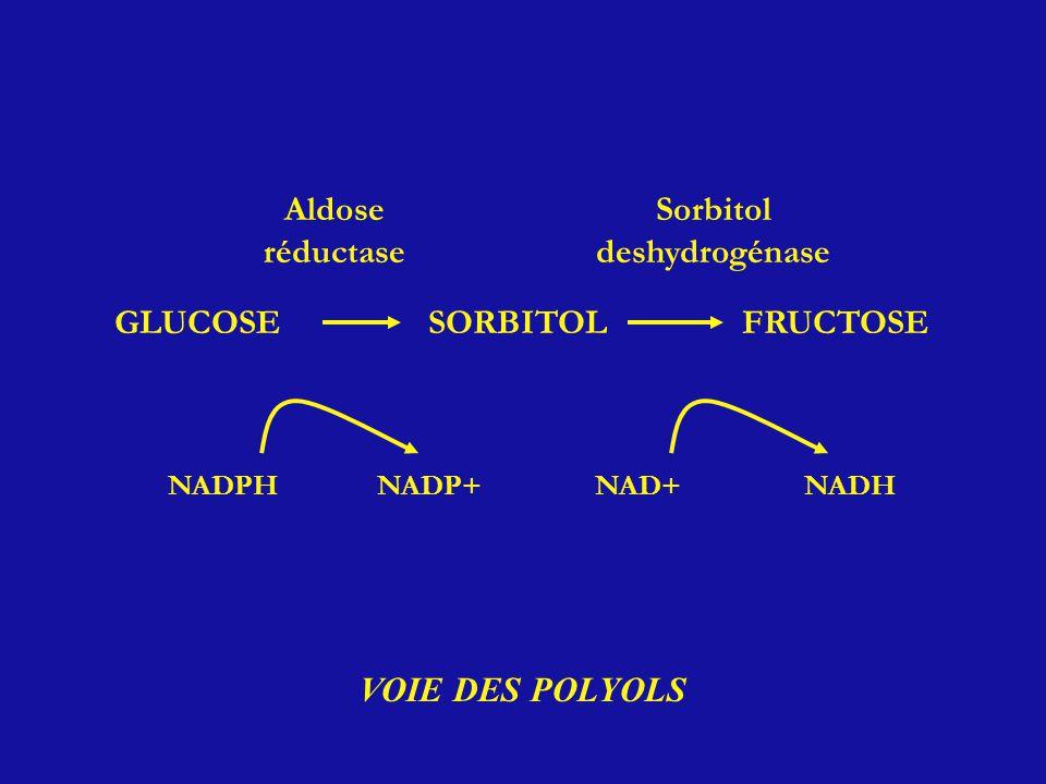 Aldose réductase Sorbitol deshydrogénase