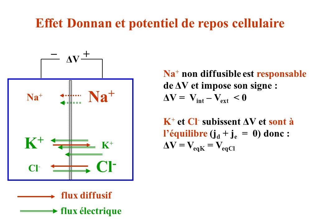 Effet Donnan et potentiel de repos cellulaire