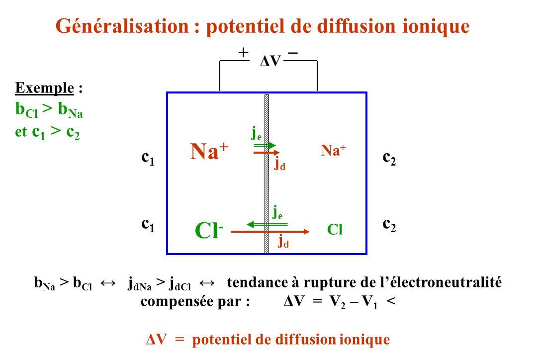 Na+ Cl- Généralisation : potentiel de diffusion ionique _ +
