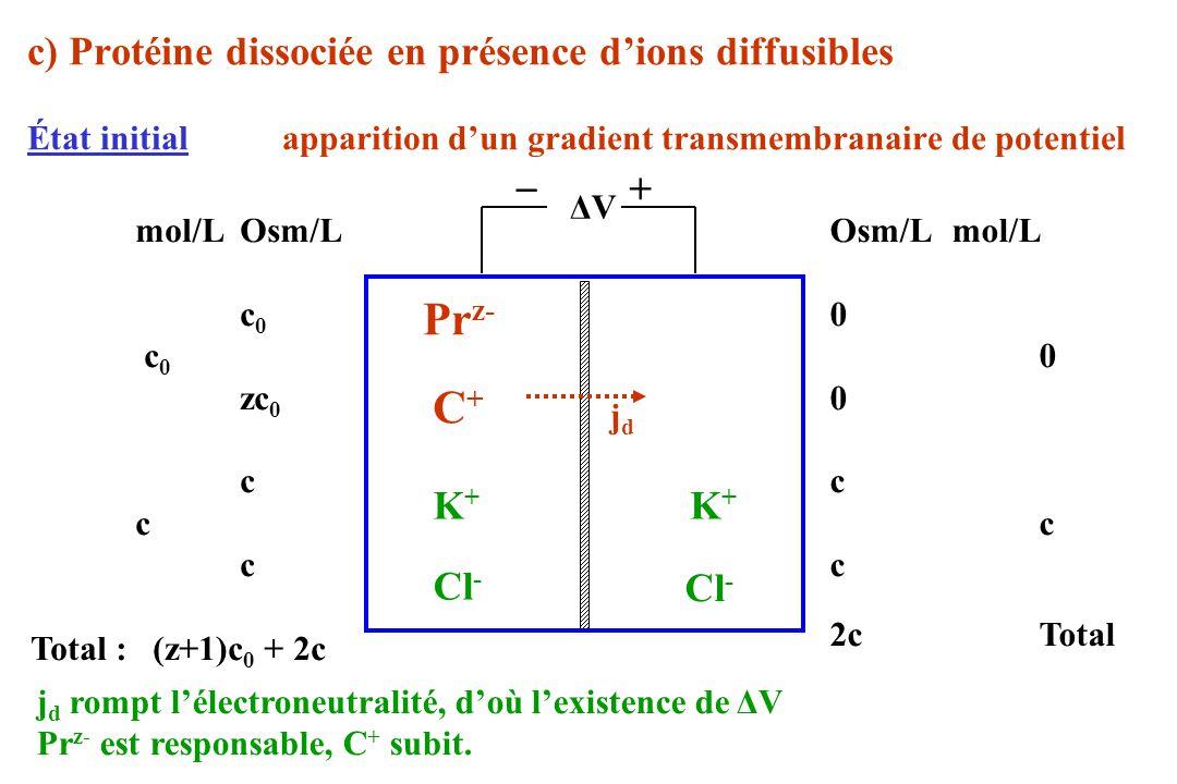Prz- C+ c) Protéine dissociée en présence d'ions diffusibles _ + K+ K+