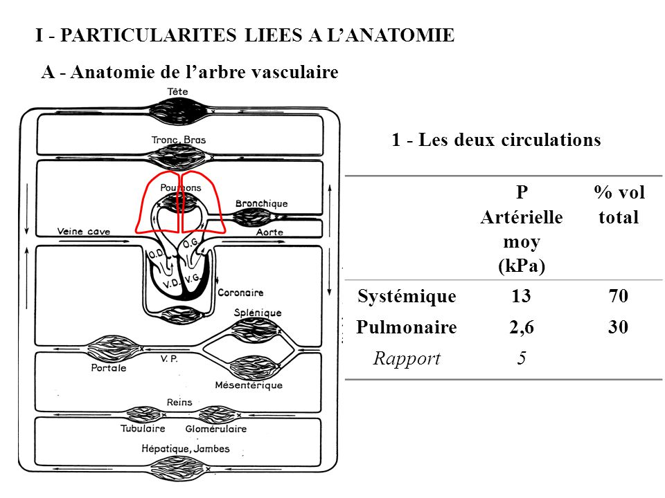 I - PARTICULARITES LIEES A L'ANATOMIE