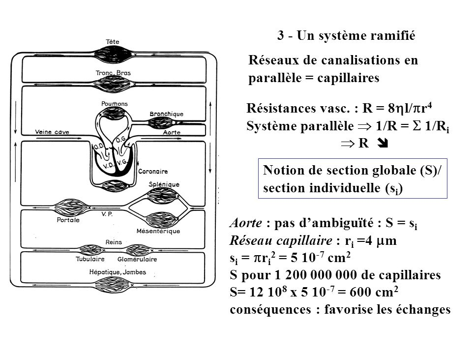 3 - Un système ramifié Réseaux de canalisations en parallèle = capillaires. Résistances vasc. : R = 8l/r4.