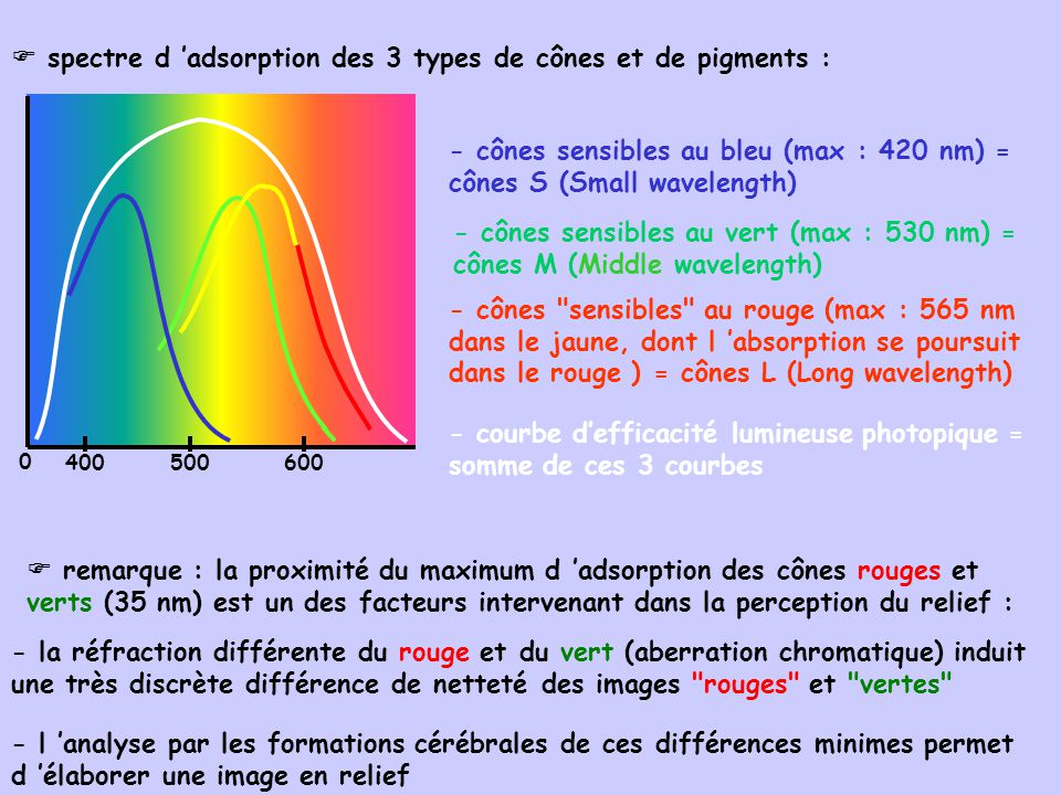  spectre d 'adsorption des 3 types de cônes et de pigments :