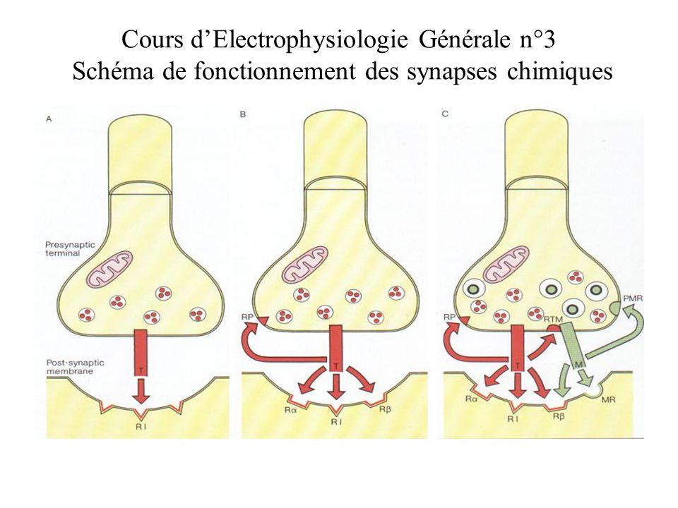 Cours d'Electrophysiologie Générale n°3 Schéma de fonctionnement des synapses chimiques