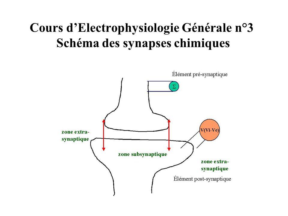 Cours d'Electrophysiologie Générale n°3 Schéma des synapses chimiques
