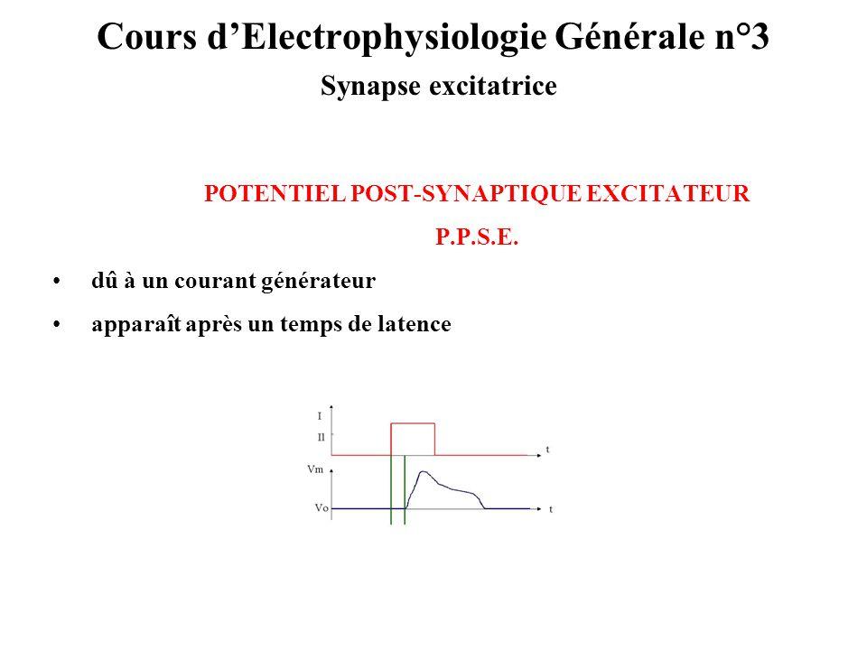Cours d'Electrophysiologie Générale n°3 Synapse excitatrice