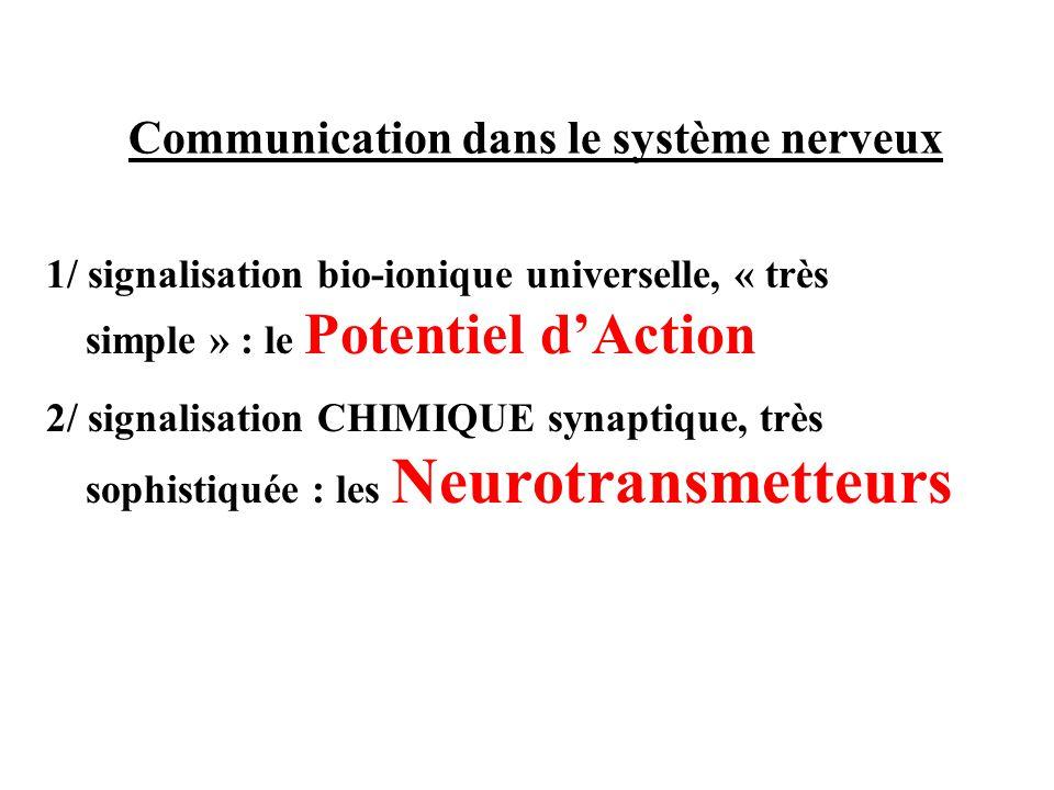 Communication dans le système nerveux