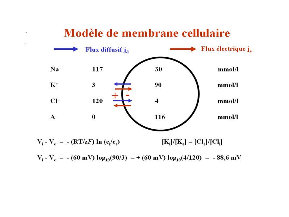 Modèle de membrane cellulaire 1
