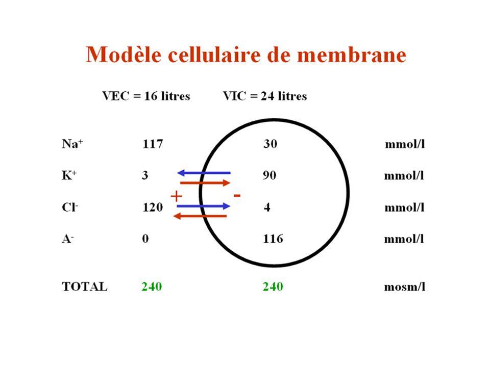 Modèle de membrane cellulaire 2