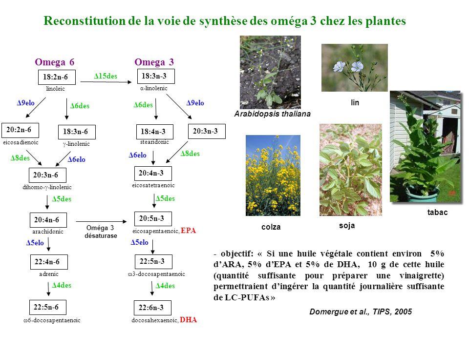 Reconstitution de la voie de synthèse des oméga 3 chez les plantes