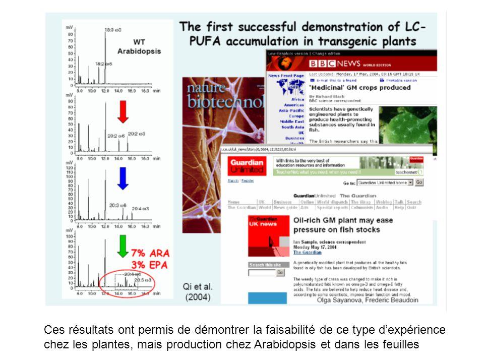 Ces résultats ont permis de démontrer la faisabilité de ce type d'expérience chez les plantes, mais production chez Arabidopsis et dans les feuilles