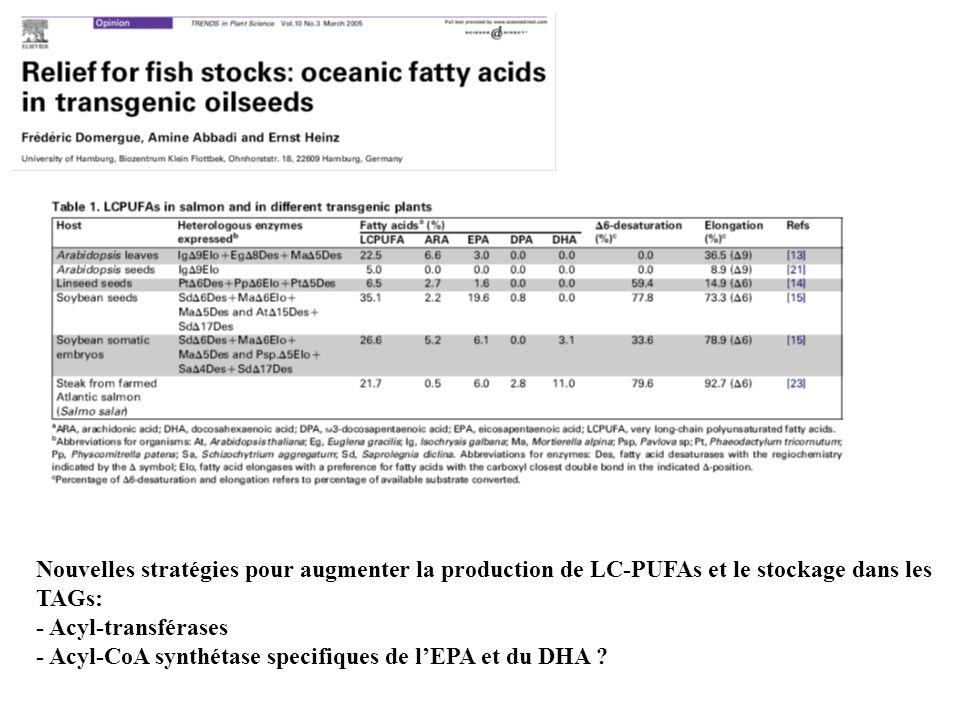 Nouvelles stratégies pour augmenter la production de LC-PUFAs et le stockage dans les TAGs: