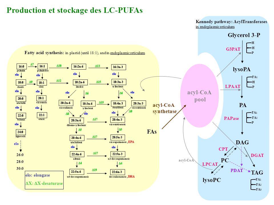 Production et stockage des LC-PUFAs
