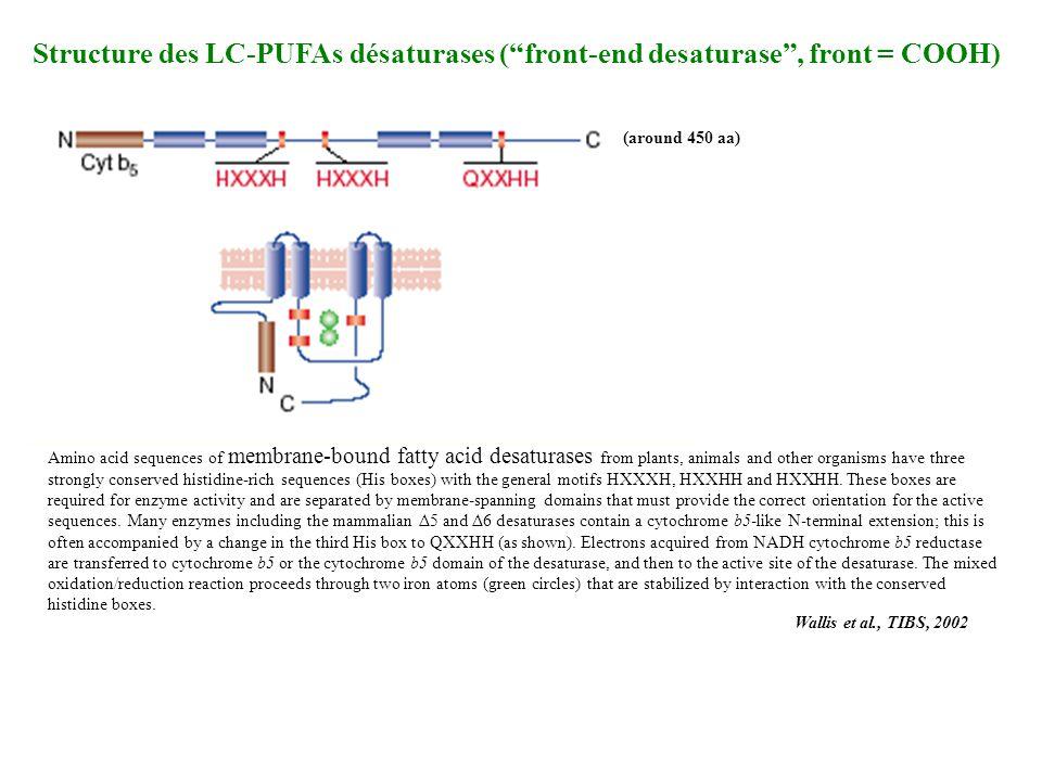 Structure des LC-PUFAs désaturases ( front-end desaturase , front = COOH)