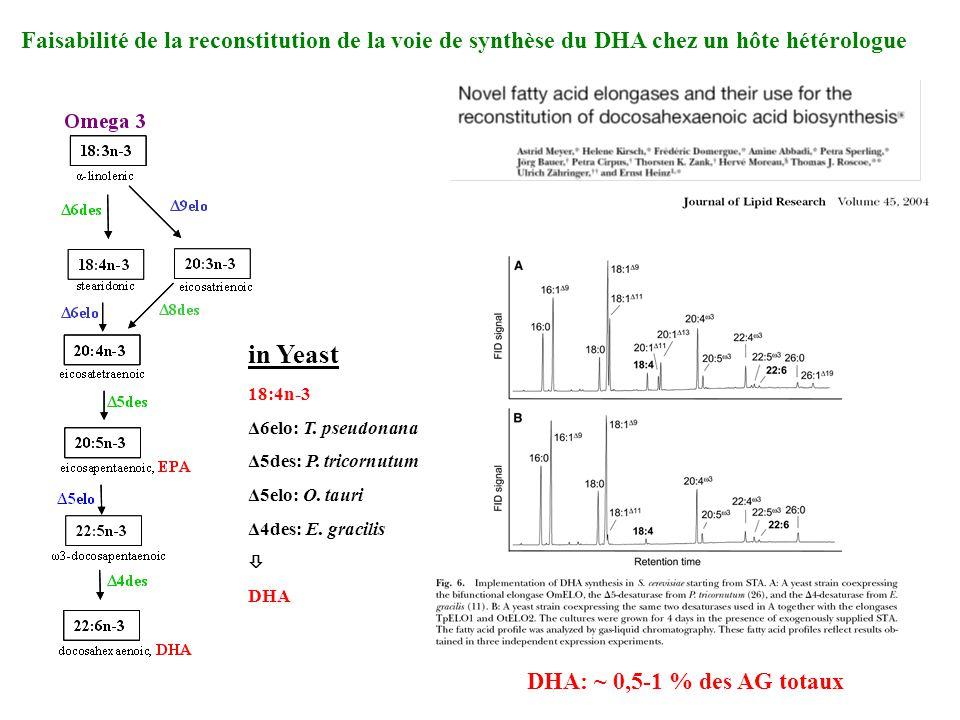 Faisabilité de la reconstitution de la voie de synthèse du DHA chez un hôte hétérologue