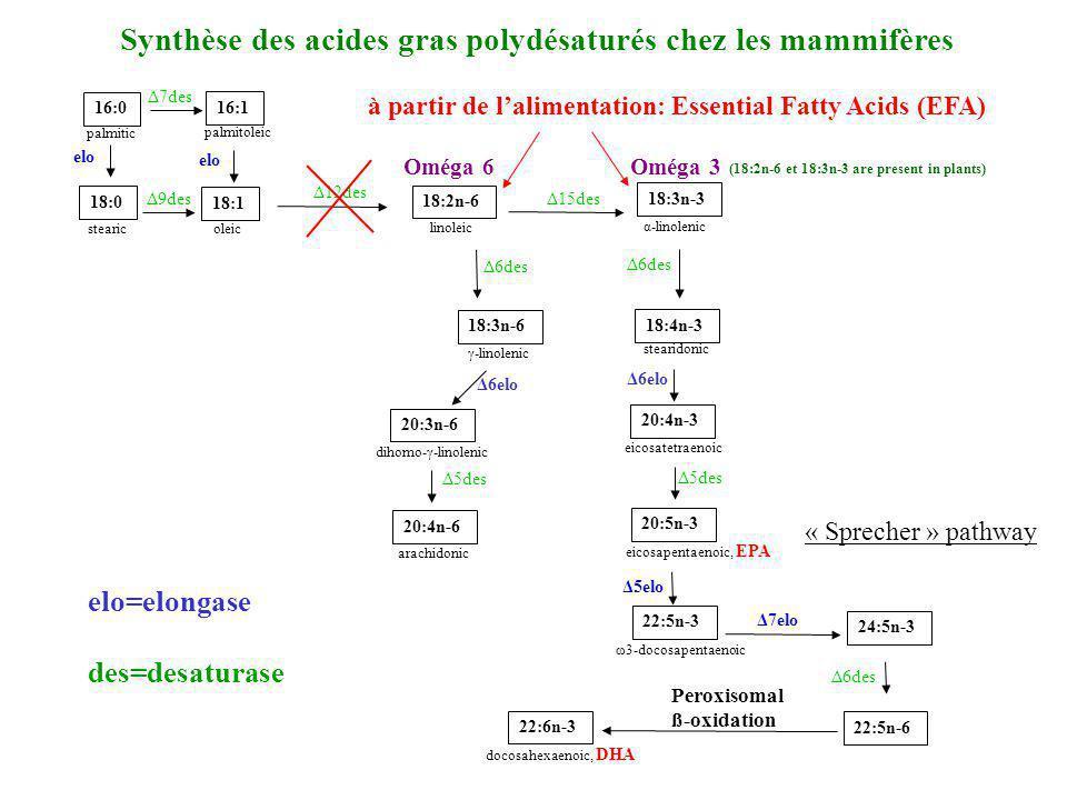 Synthèse des acides gras polydésaturés chez les mammifères