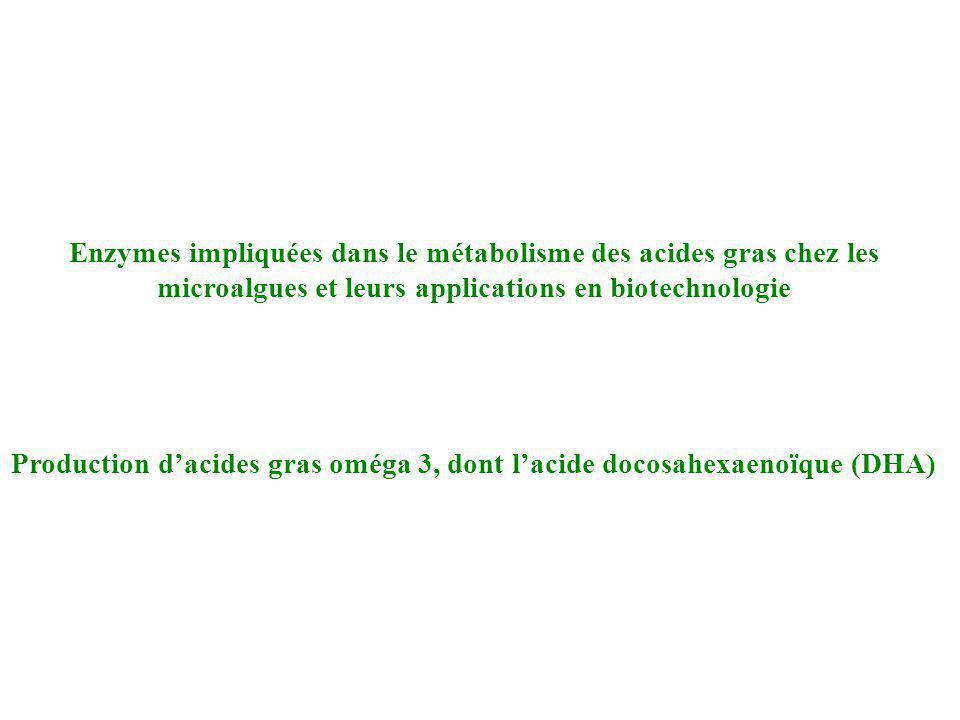 Production d'acides gras oméga 3, dont l'acide docosahexaenoïque (DHA)