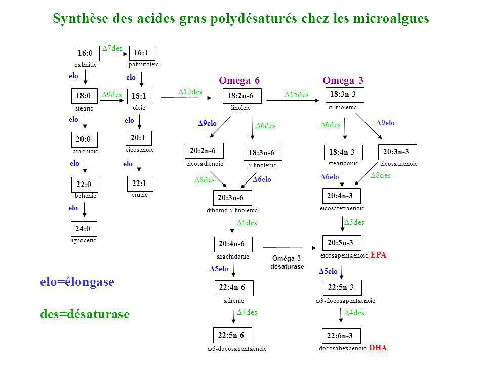 Synthèse des acides gras polydésaturés chez les microalgues