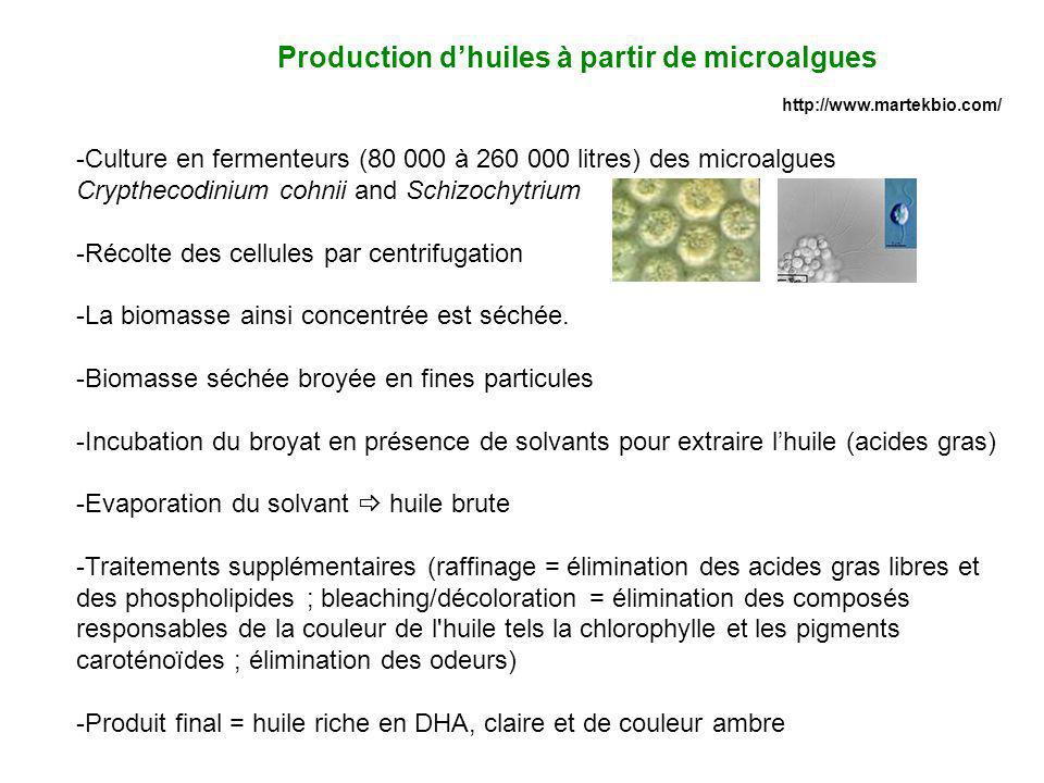 Production d'huiles à partir de microalgues
