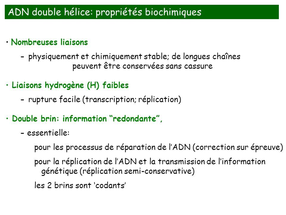 ADN double hélice: propriétés biochimiques
