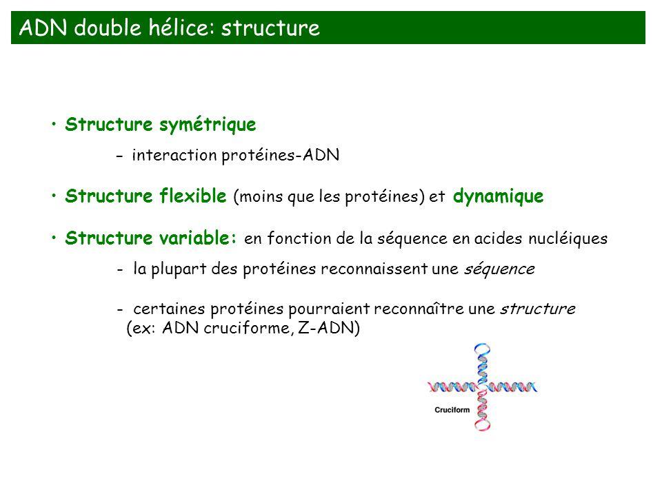 ADN double hélice: structure