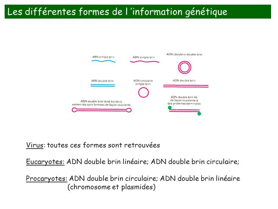 Les différentes formes de l 'information génétique