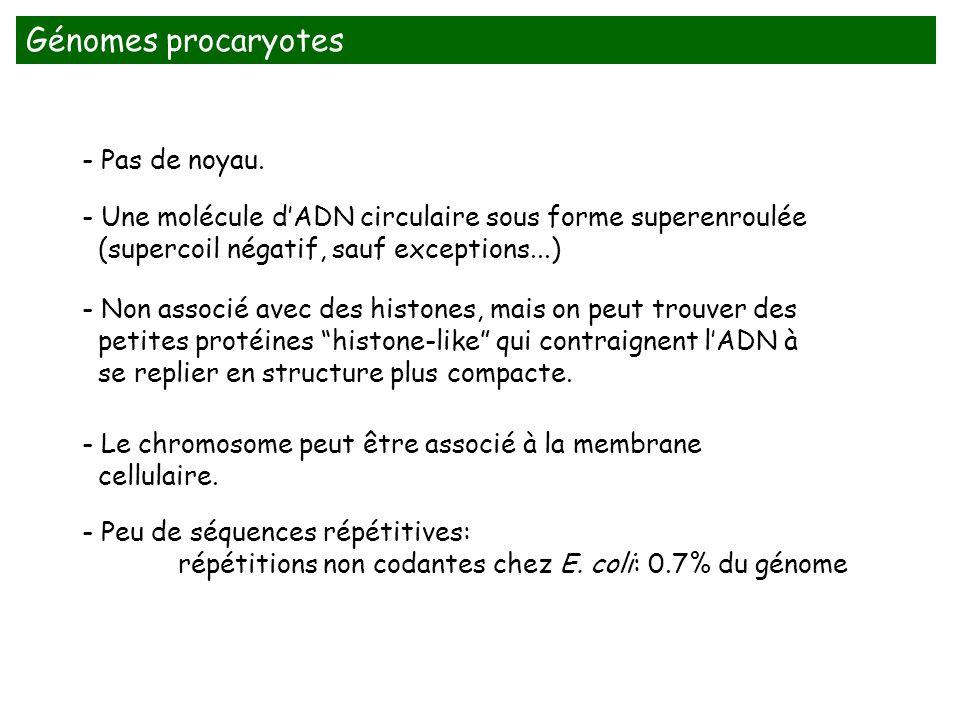Génomes procaryotes - Pas de noyau.