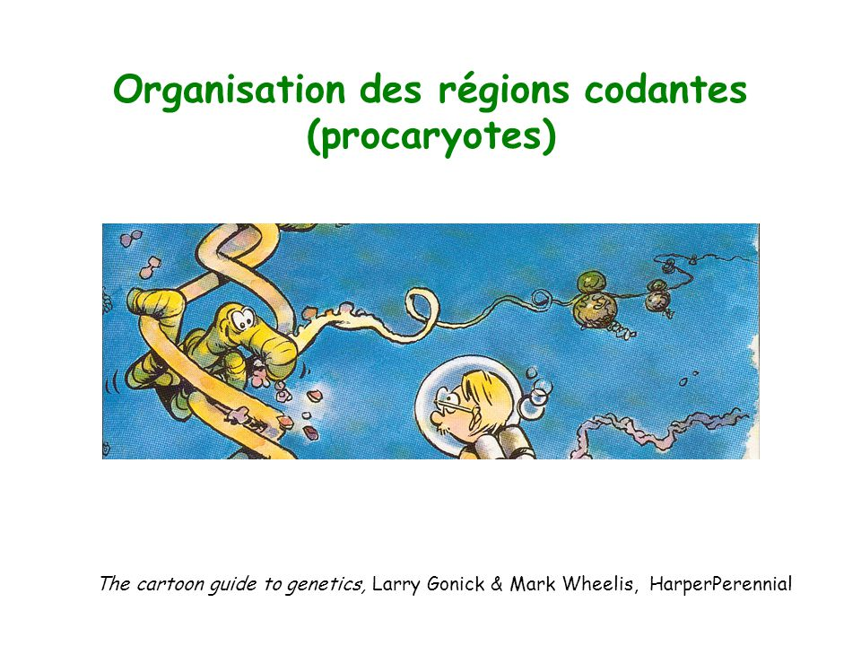 Organisation des régions codantes (procaryotes)