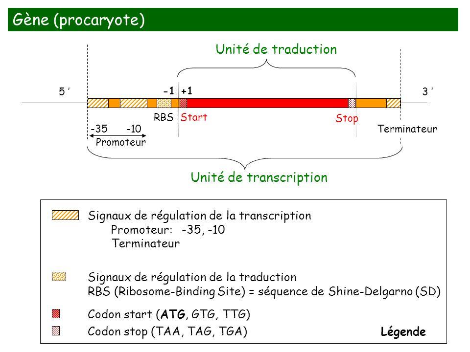 Gène (procaryote) Unité de traduction Unité de transcription