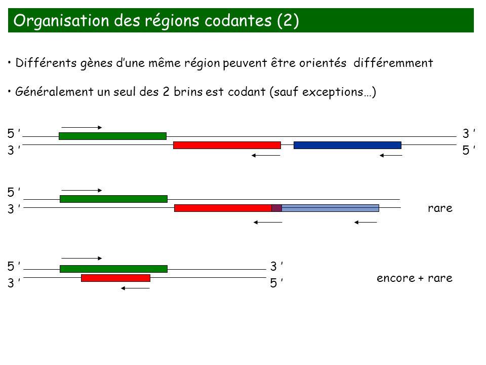 Organisation des régions codantes (2)