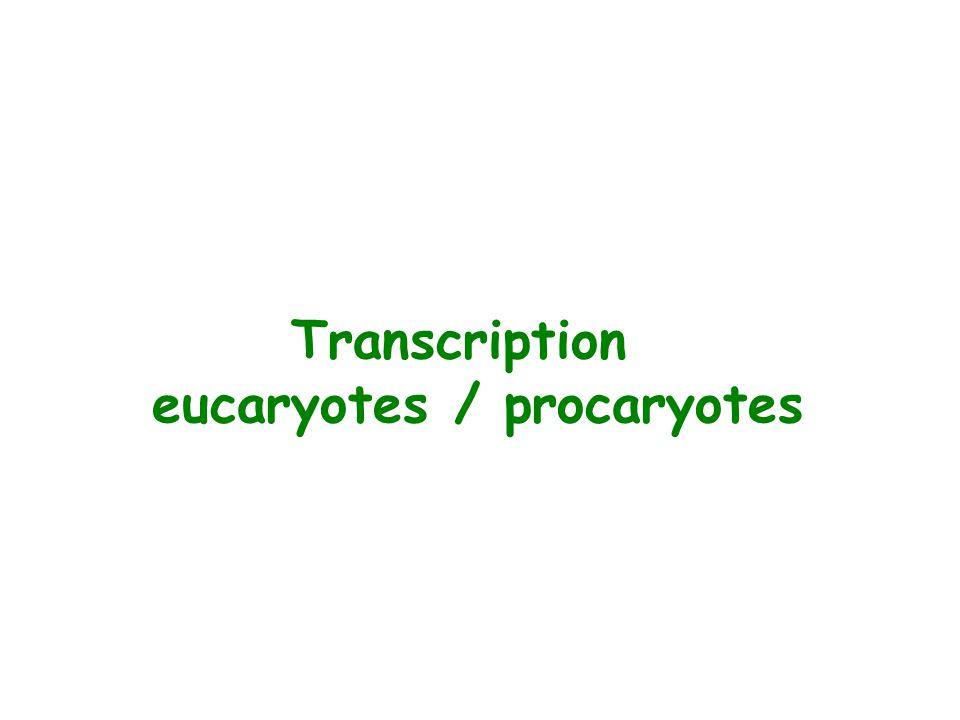 eucaryotes / procaryotes