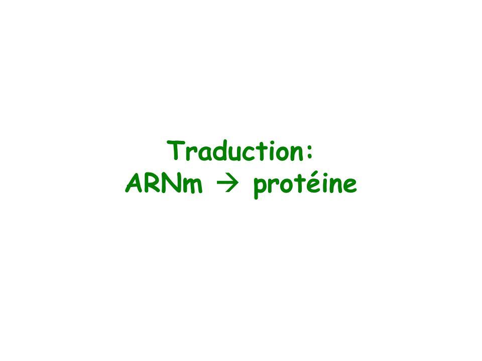 Traduction: ARNm  protéine