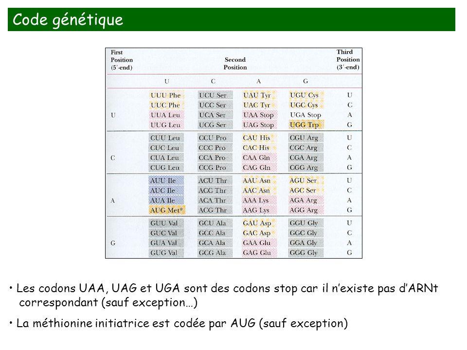 Code génétique Diapo 94. Les codons UAA, UAG et UGA sont des codons stop car il n'existe pas d'ARNt.