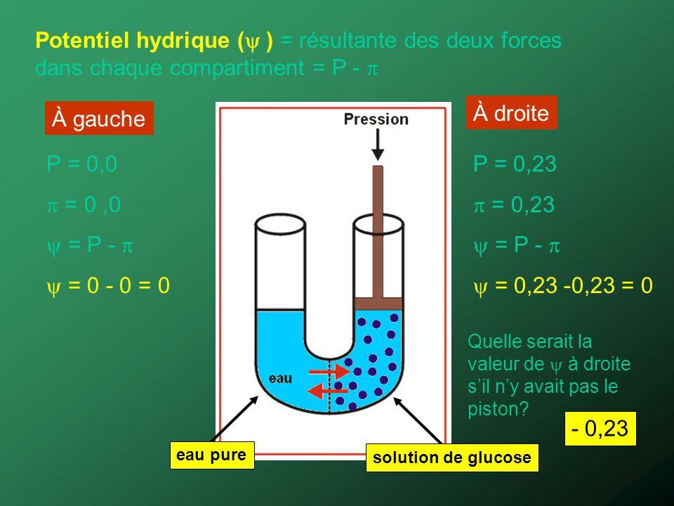 Potentiel hydrique ( ) = résultante des deux forces dans chaque compartiment = P - 